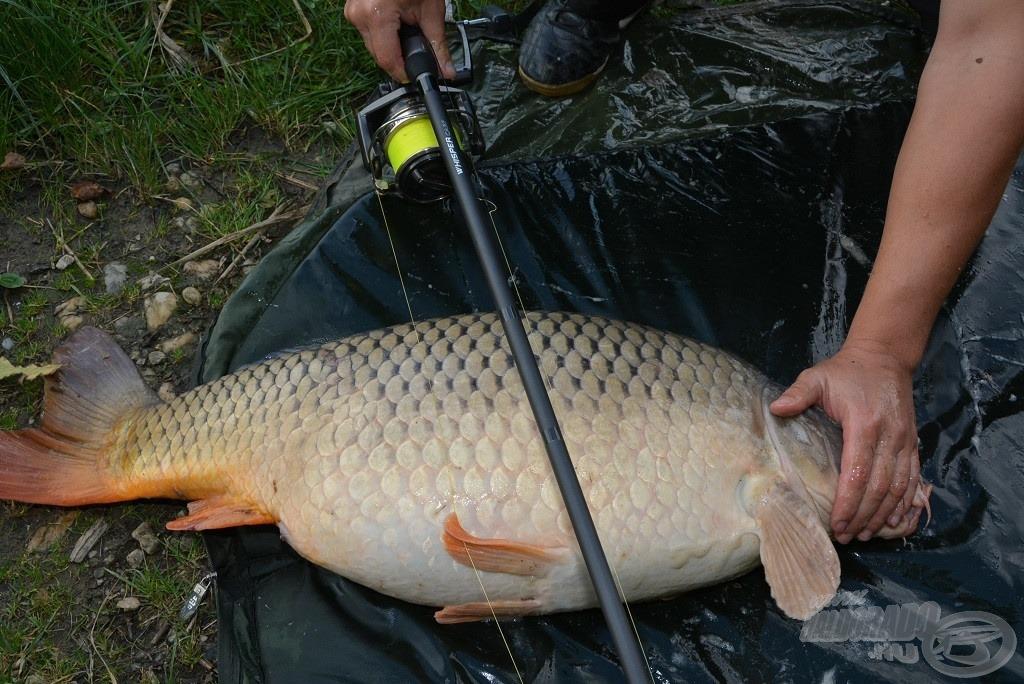 A botteszt legnagyobb hala, 15,5 kg