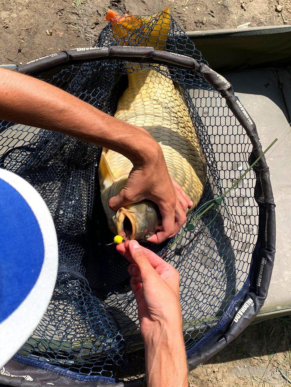 Még a csali is jól látszik, ez a hal is édesre jött
