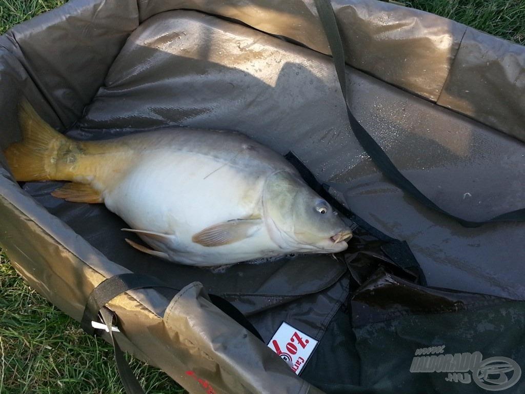A nap legnagyobb hala, 7,40 kg