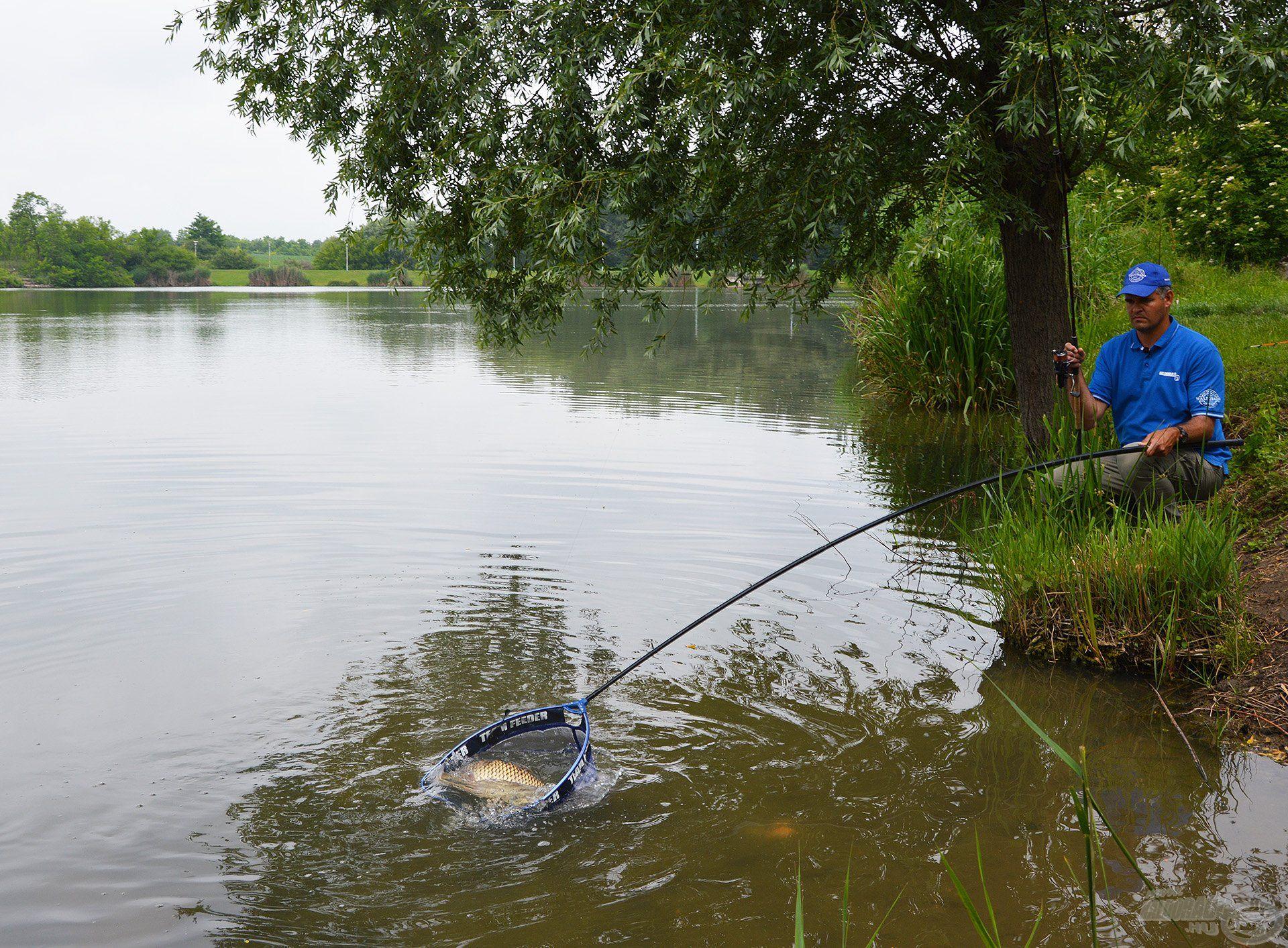 Sokszor a távolabbi régiókban termetesebb halak is laknak