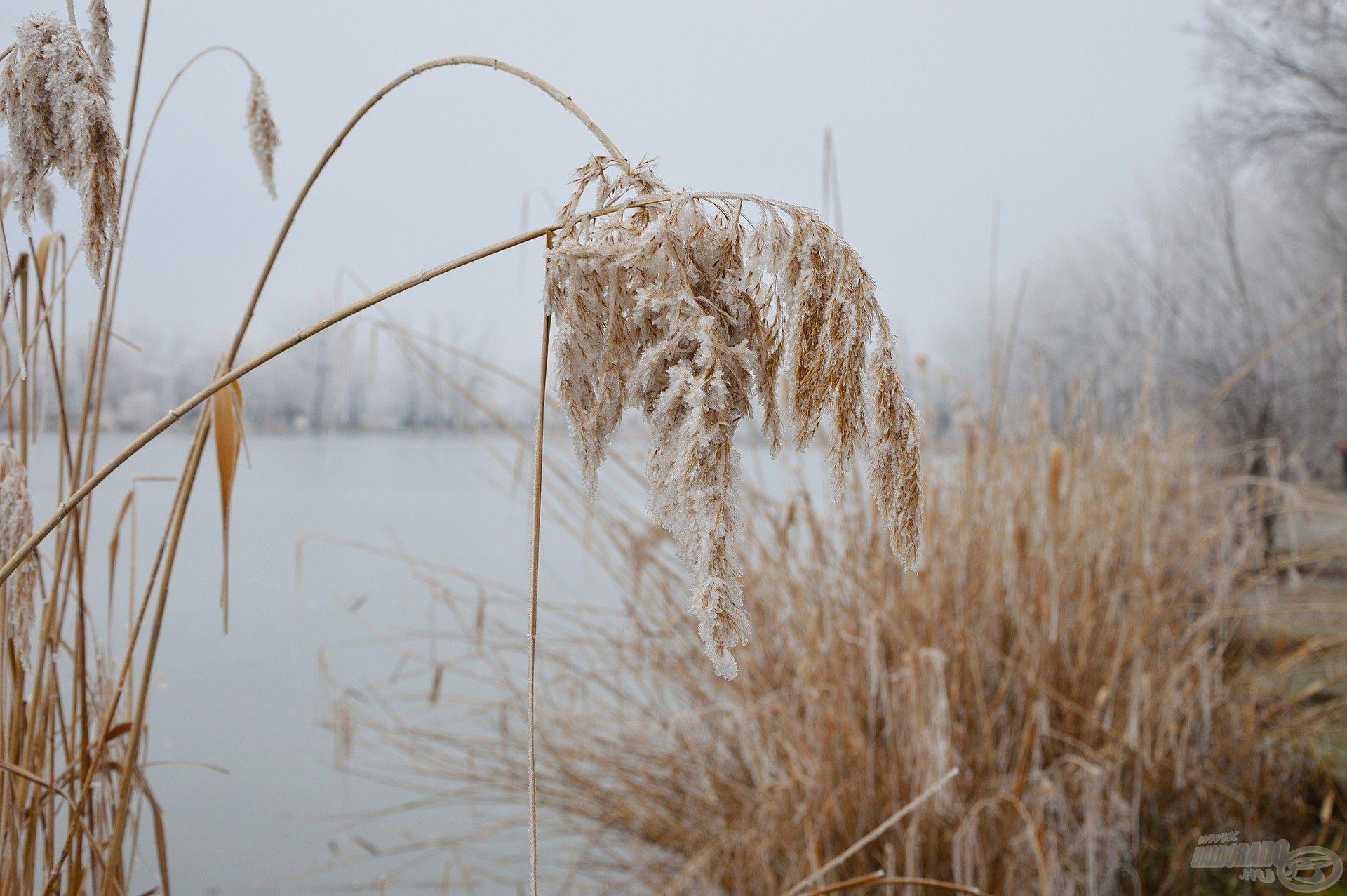 A tél tökéletes arra, hogy elméleti tudásunkat bővítsük