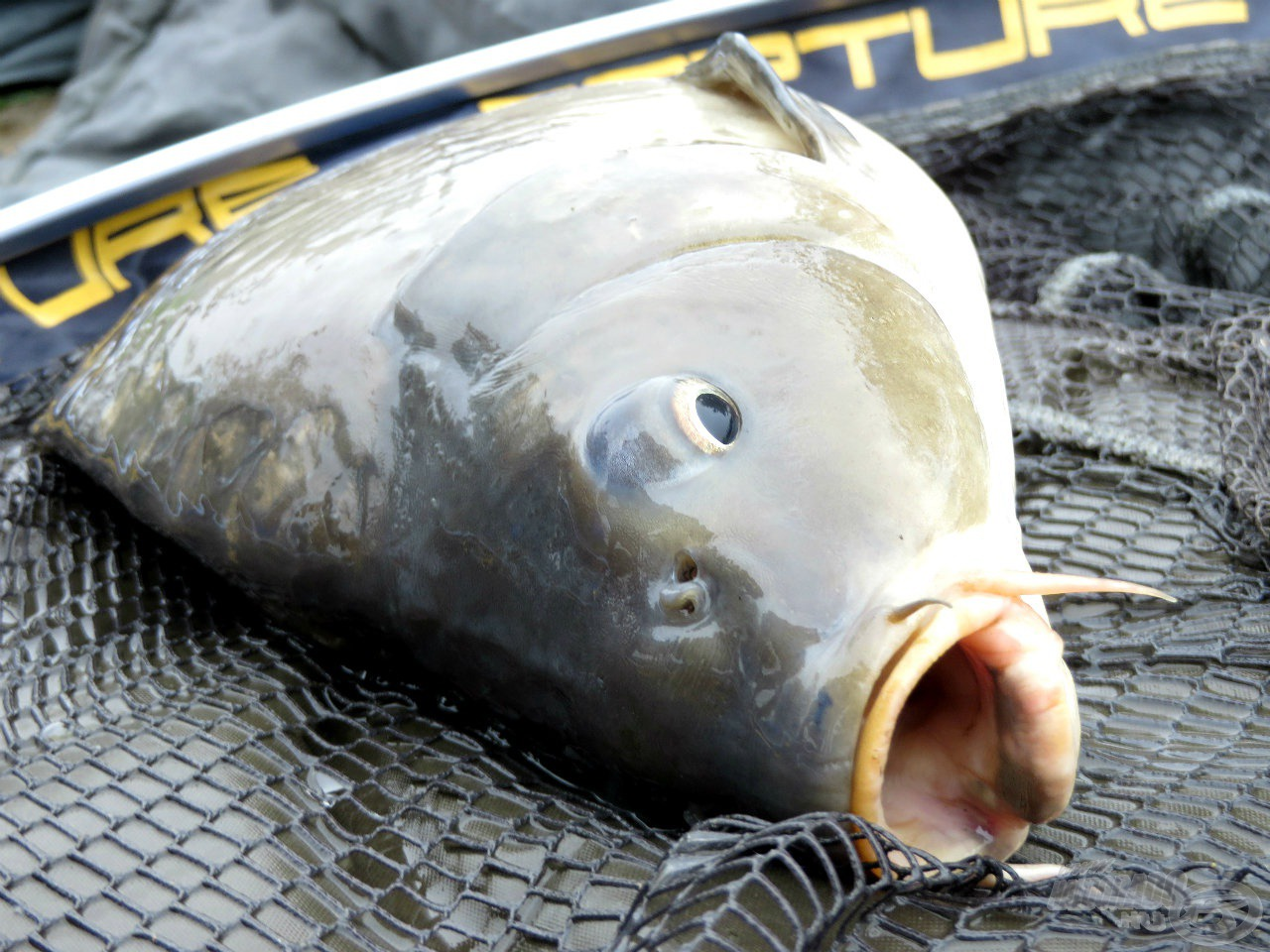 Methodos halkitermelés a Lencsés Horgásztavon
