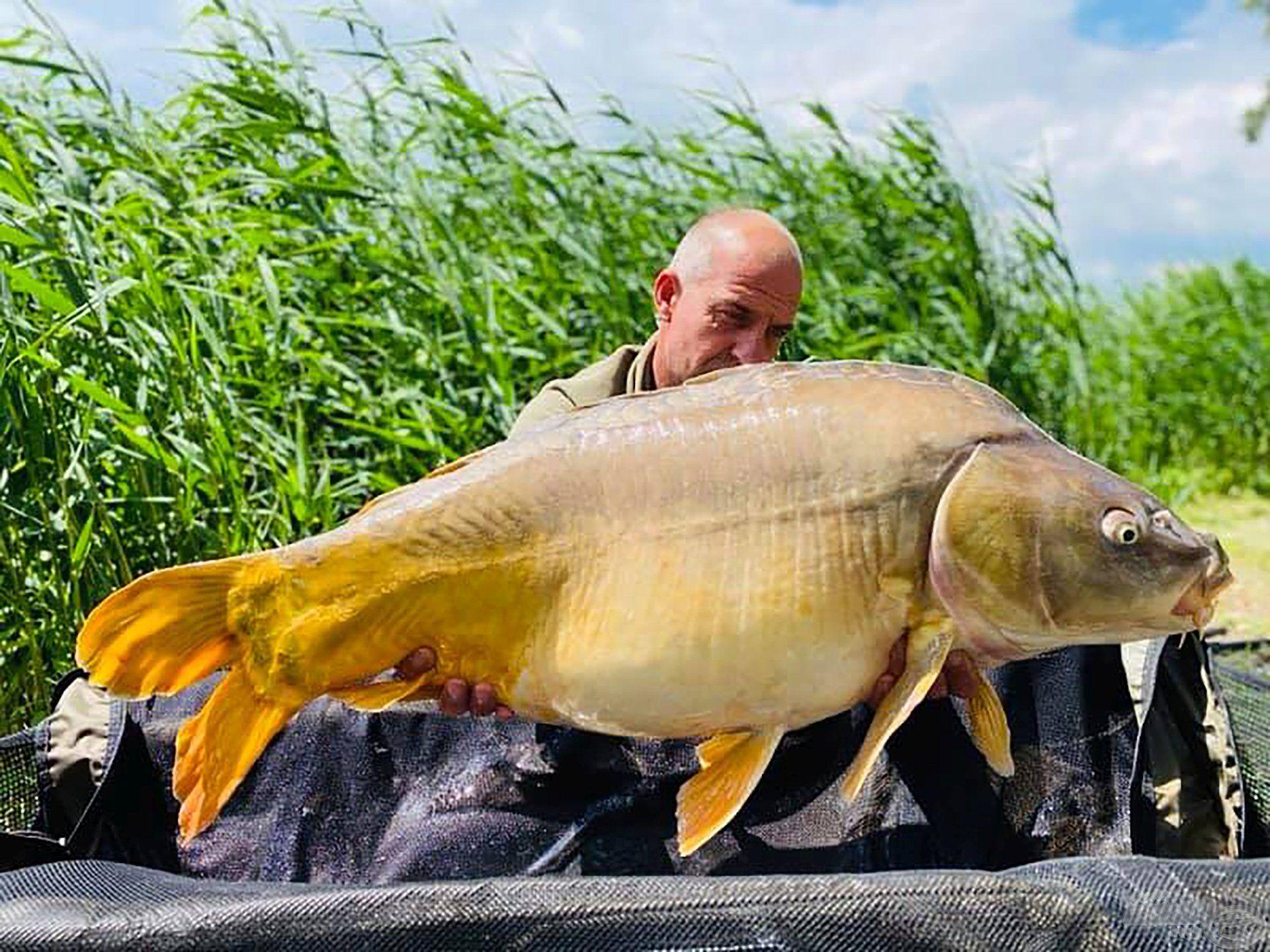 Ilyen és ehhez hasonló szép, egészséges halak élnek a vízben