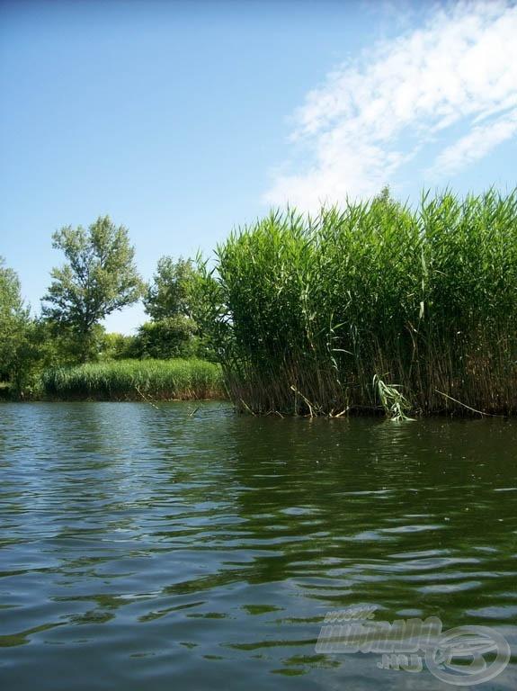 Csodálatos víz, ideális élettér az amurok számára is