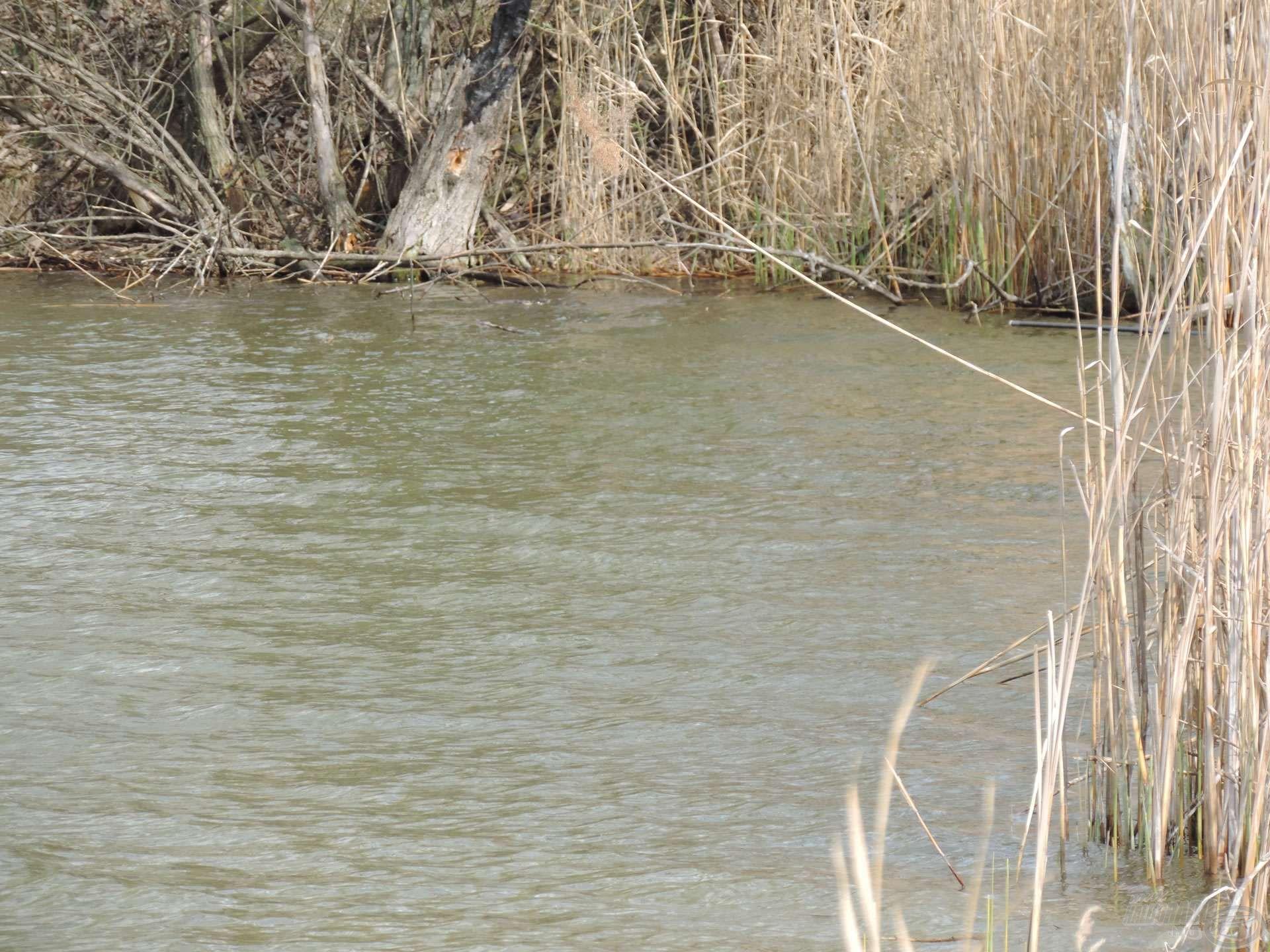 … de megéri ide horgászni, ha ilyen remek halak falatoznak ott..