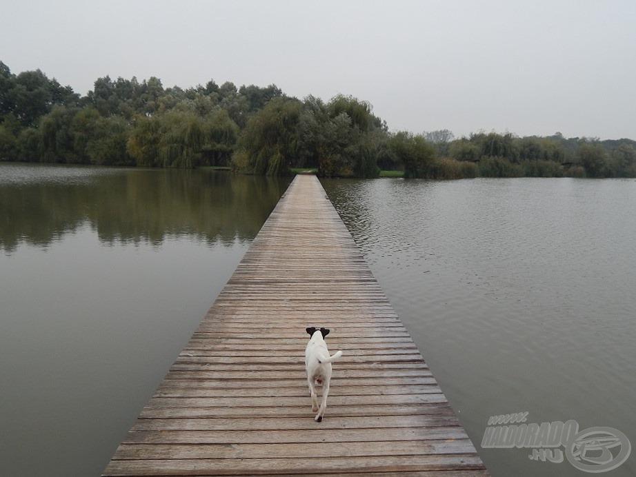 Idegenvezető is jár a horgászat mellé :)