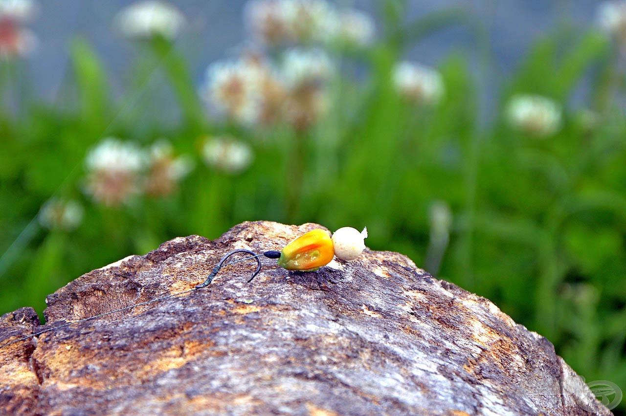Egy szem kukorica és egy minibojli gyakran elegendő méretű csali, ha method kosárban kínáljuk azt fel