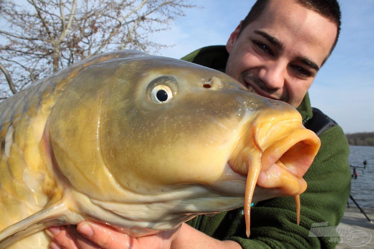 Erőtől duzzadó, egészséges pontyok - itt ez vár a horgászokra!