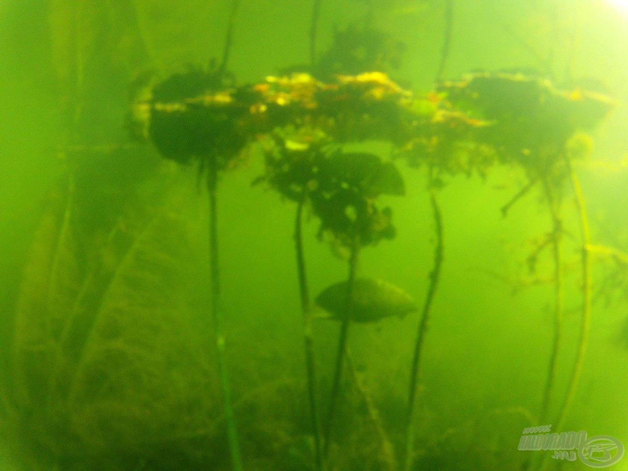 Növények a halak szemszögéből