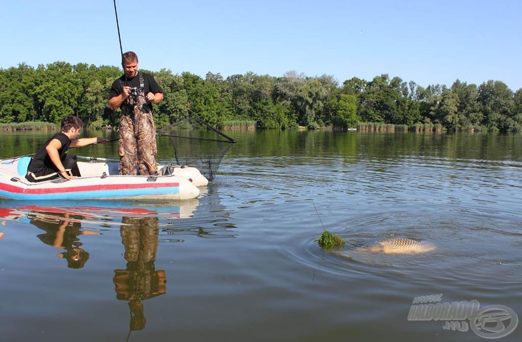 Nagyhalas praktikák a Ráckevei  -Dunán