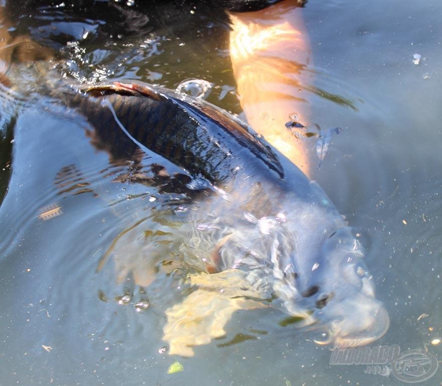 … nyerték vissza a halak szabadságukat!