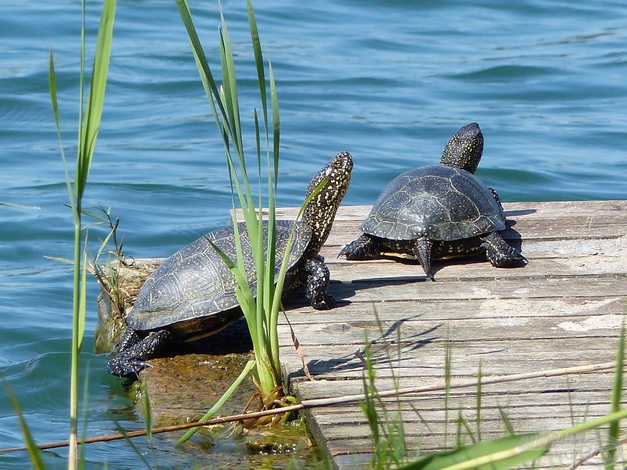 Nagyhalas praktikák egyesületi tavakon 1. rész