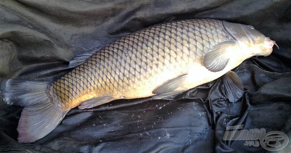 Őszi színekben pompázó tőponty a kitartó horgászok jutalma