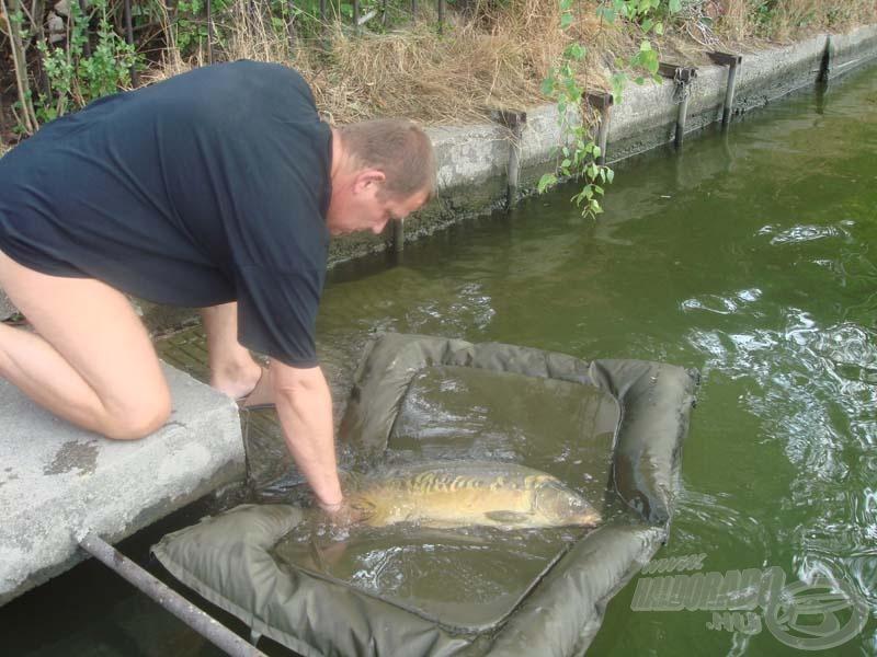 A túra legkisebb, 7,8 kg-os pontya is ott úszkál még a Duna-ágban…