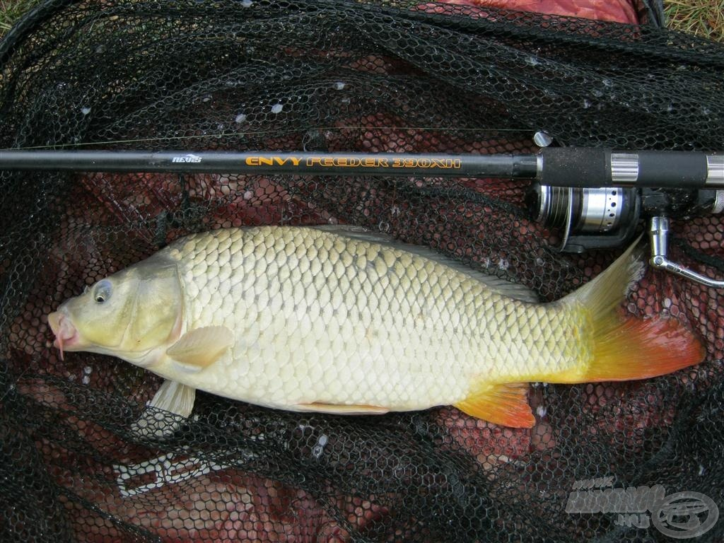 Nagyon élvezetes volt a horgászat a Nevis Envy feederbottal
