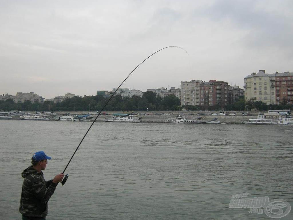 Ennél a halnál már kijött a botban rejlő erő! Úgy felőrölte a hal erejét, hogy csak lestem
