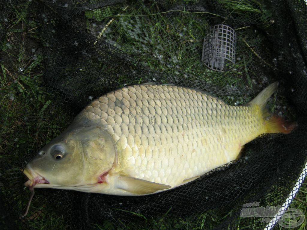 Miközben a kifogott halak mennyiségén filóztam, csoda történt! Fogtam még egy pontyot!