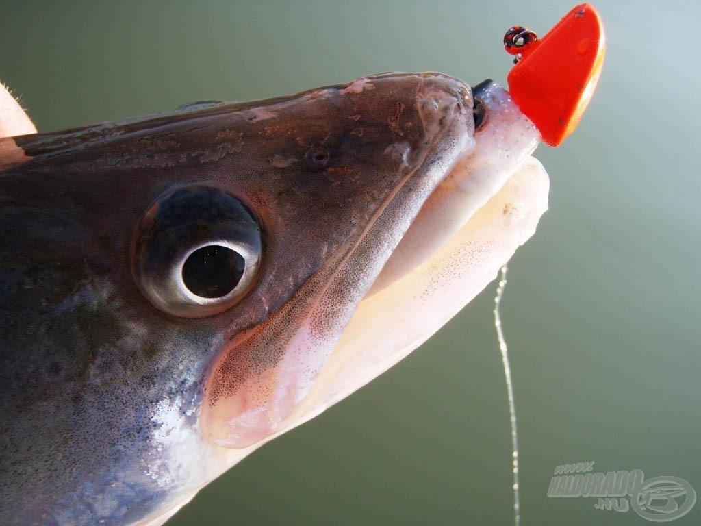 """""""A hal kell, de az a piros izé nem!"""""""