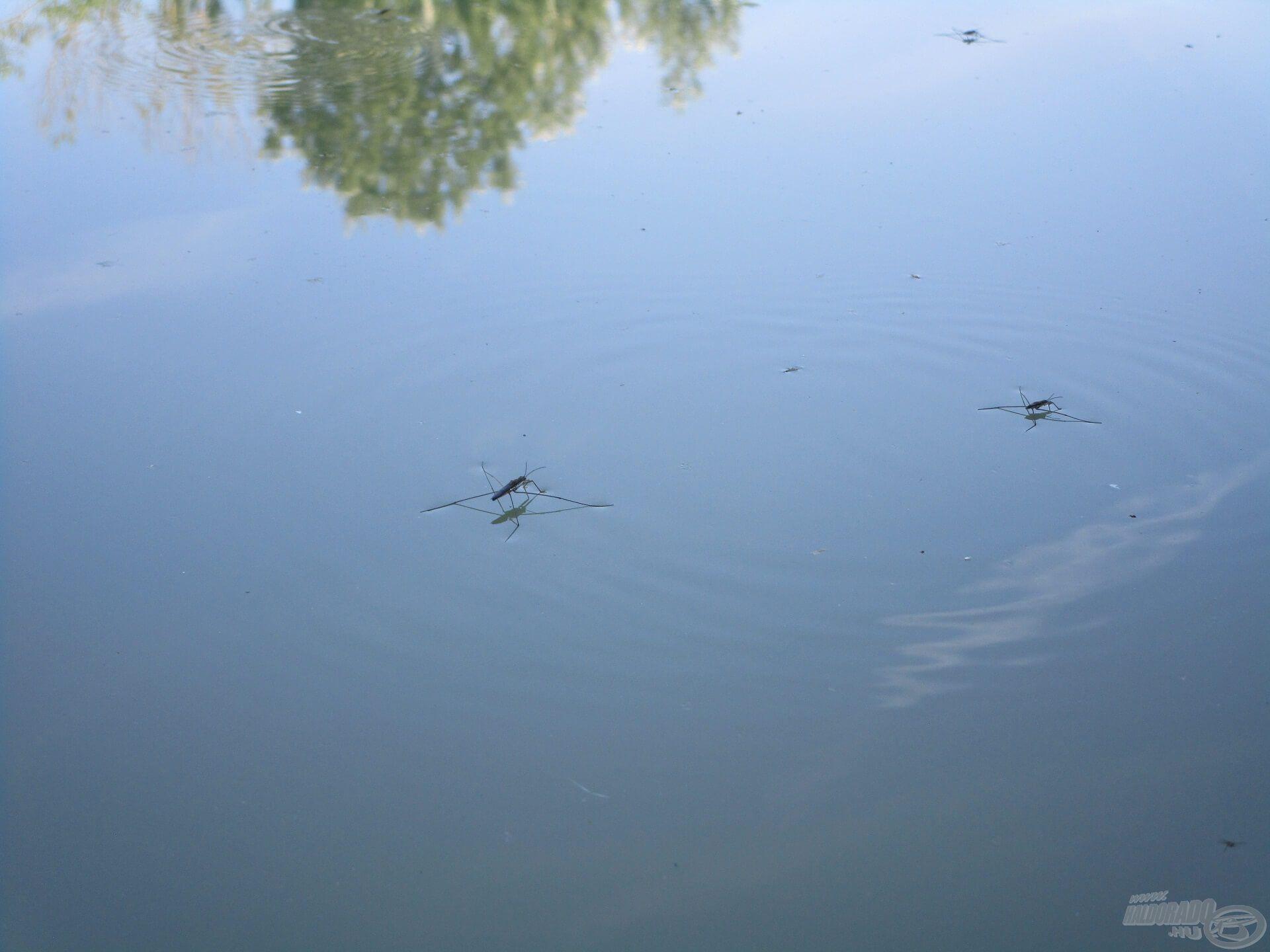 Késő délután ismét elcsendesedett a víz…