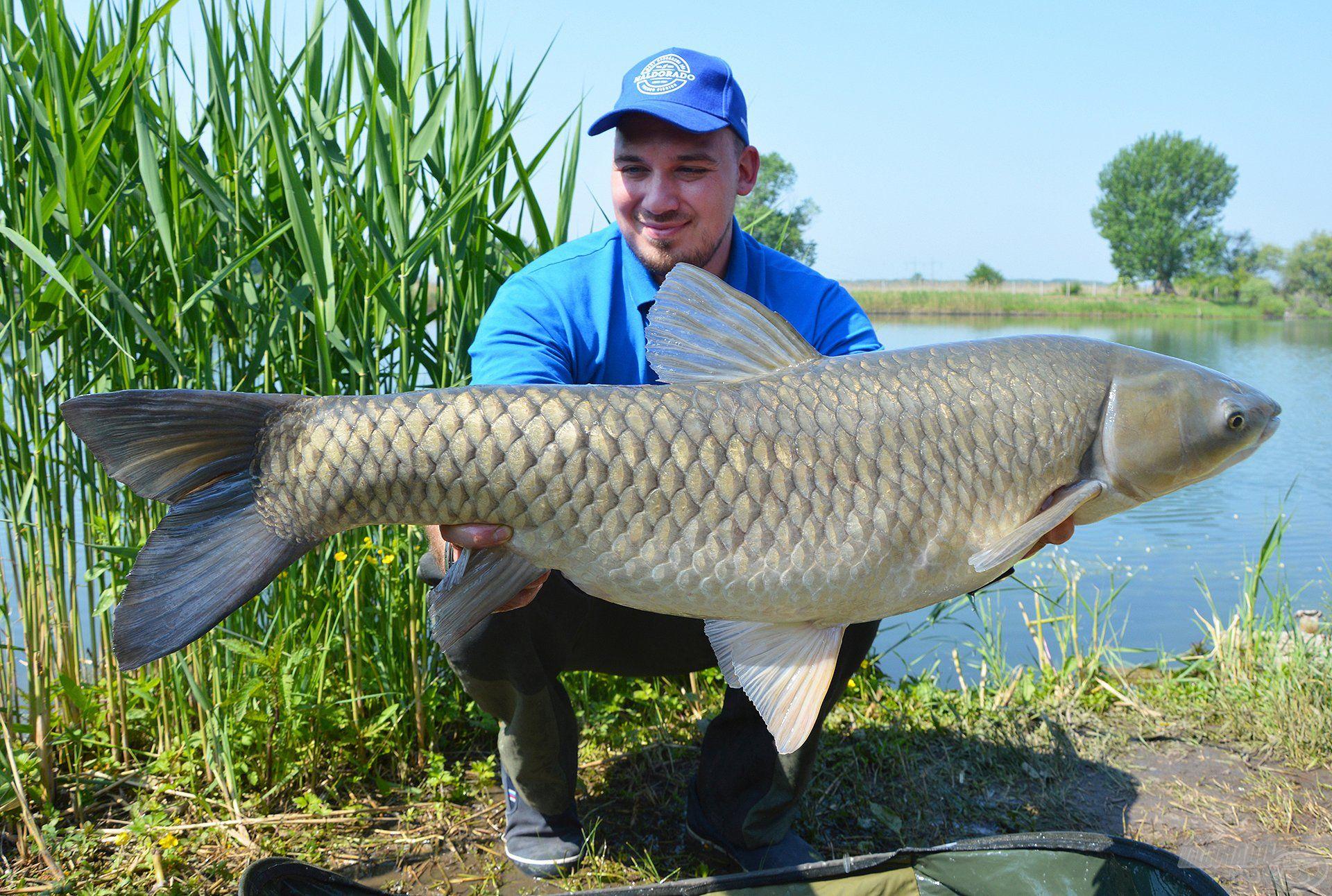 Az első halam volt ez a nagy amur, amit aznap reggel a kezemben tarthattam, nem is csoda, hogy hamar megkedveltem ezt a vizet!