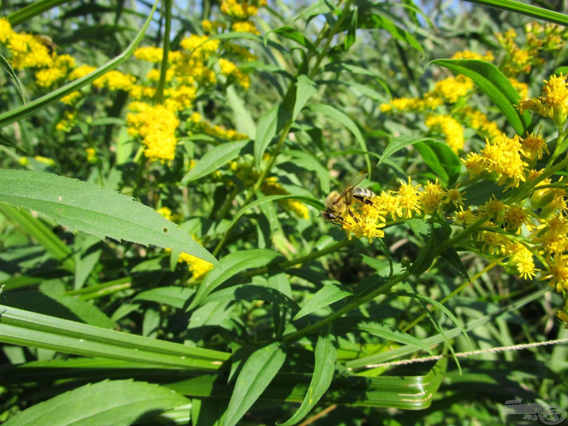 A méhecskék szorgalmasan gyűjtötték a nektárt