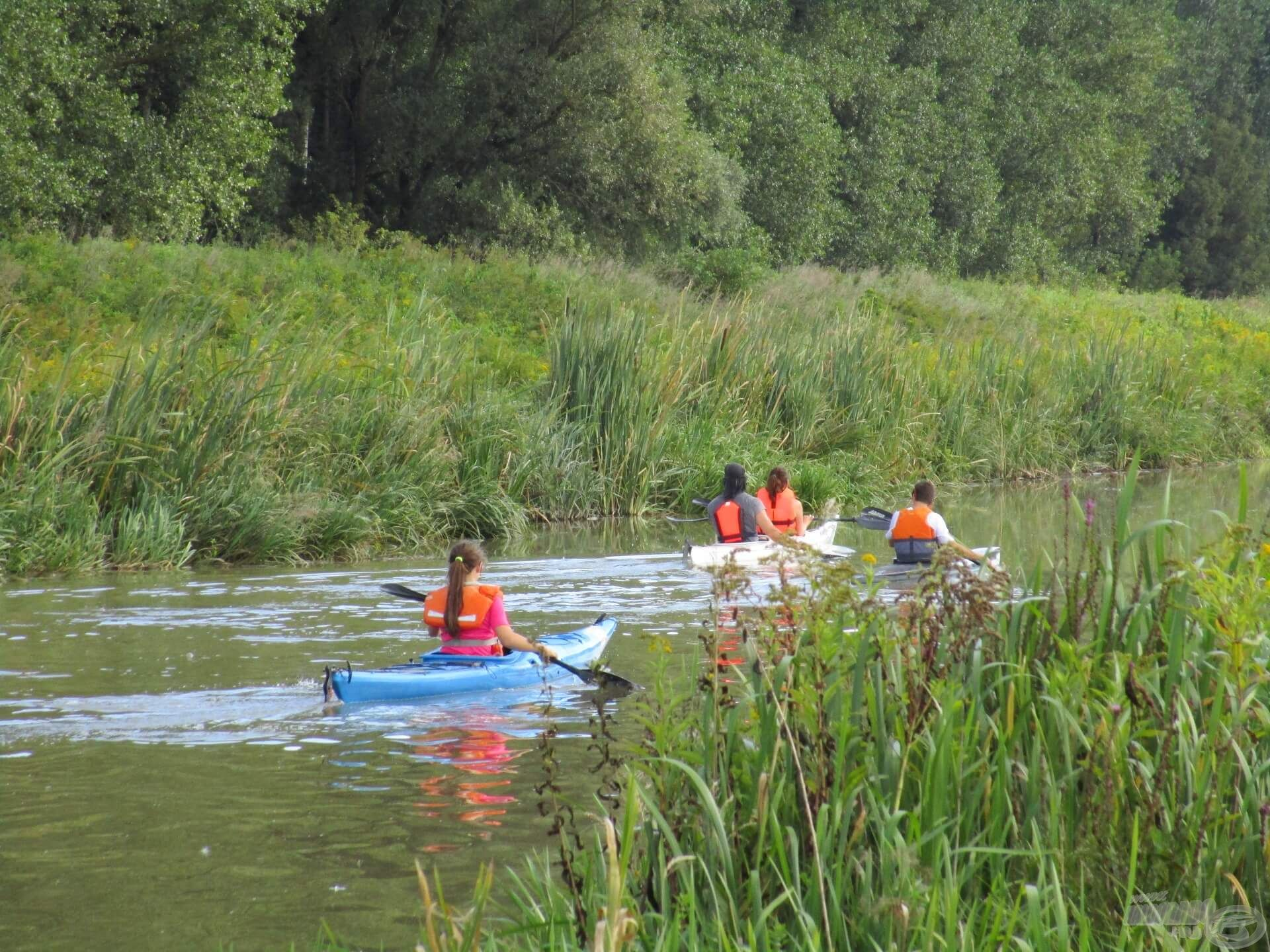 A Zala viszonylag szűk és nem túl mély folyó, ezért az evezősök rendesen megzavarják a halak nyugalmát