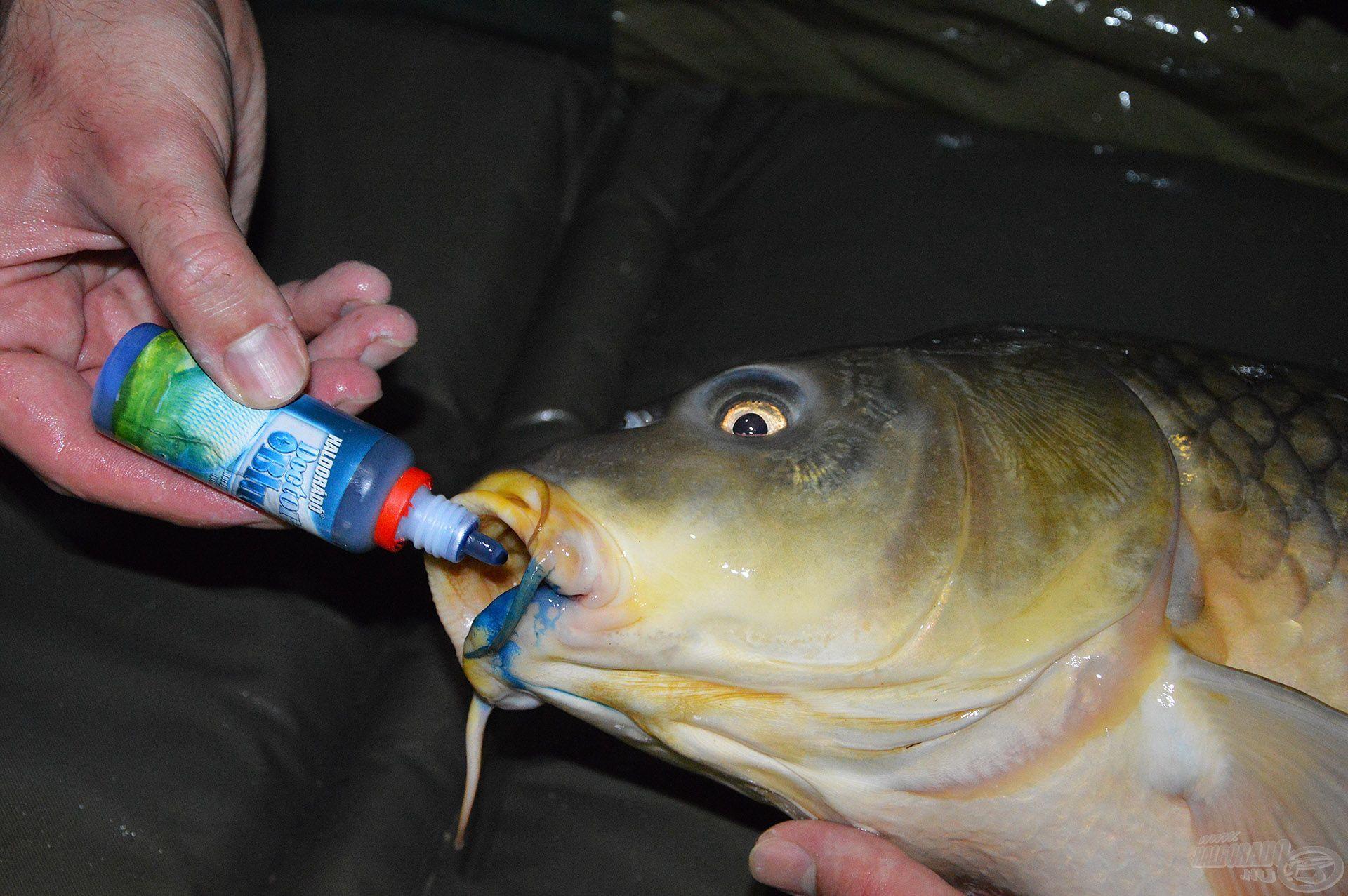 Számunkra csupán egy apró mozzanat, a halnak viszont annál fontosabb törődés!