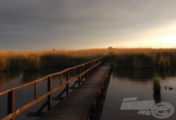 Kb. 30-40 méter hosszú bejáró vezet a széles horgászhelyre… gyönyörű, vadregényes hely a nádasban