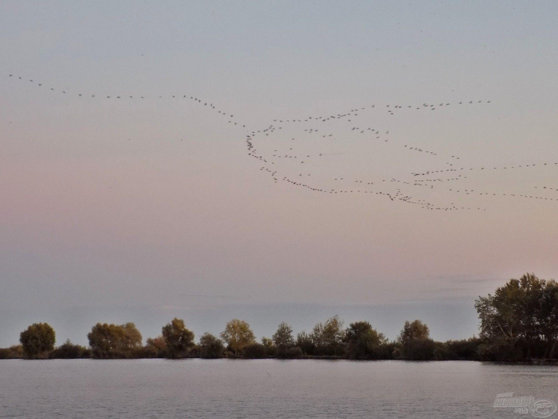 """Jellegzetes, nagy hanggal vonuló vadliba csapatok hangjától """"zajos"""" a tó környéke reggel és este, és e madarak mozgása természetesen látványos jelenség is egyben"""