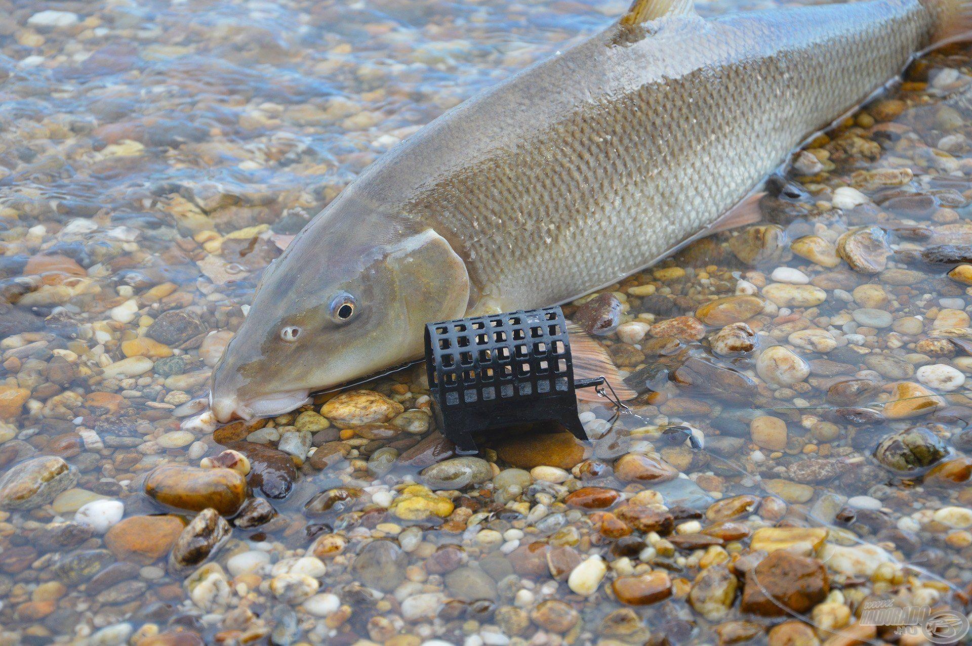 A Big River Feeder kosár karmai mindenben megkapaszkodnak