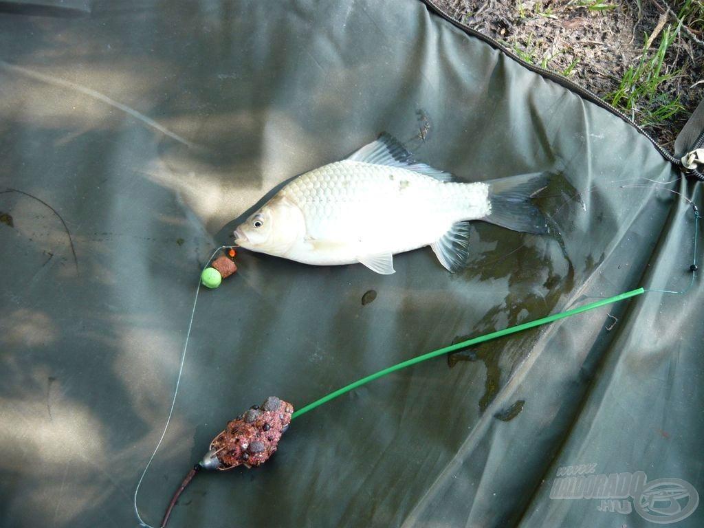 Fűszeres-halas kárász