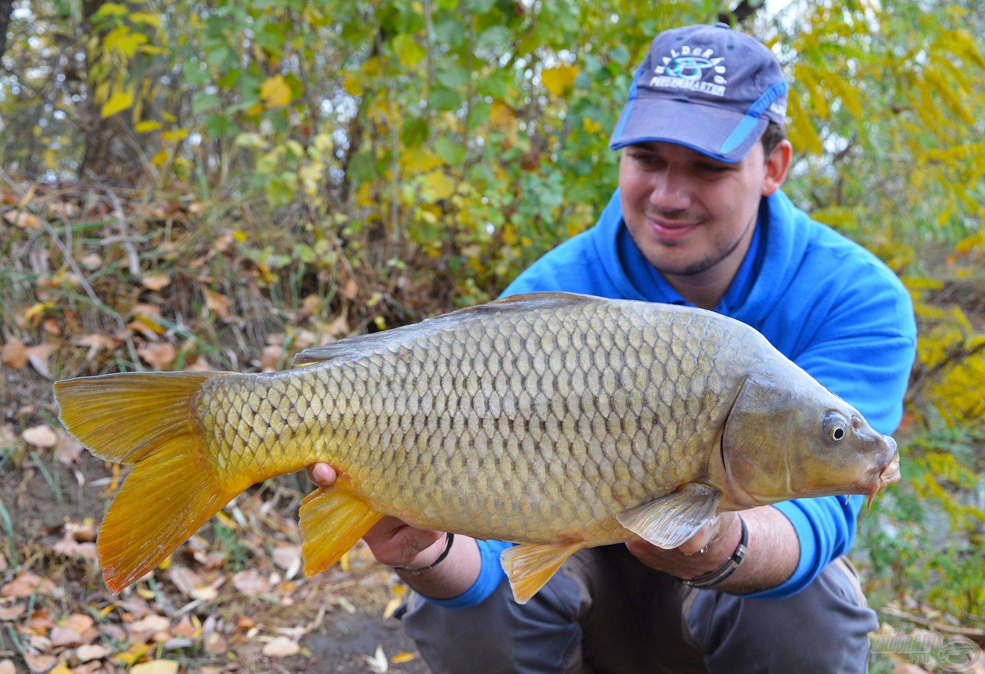 Jellegzetesen szép, egészséges halak lakják a tavat, melyik közül ez a méret a leggyakoribb