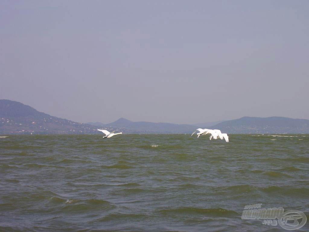 Egyedülálló a tó és a tó környékének élővilága
