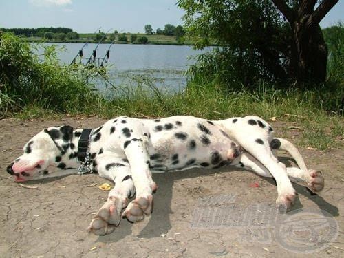 """A verseny fő időjárási jellemzője a """"kutya"""" meleg volt."""