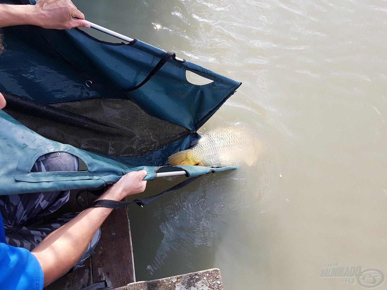 … melyet a halak méretétől függetlenül kötelező használni a visszaengedés során