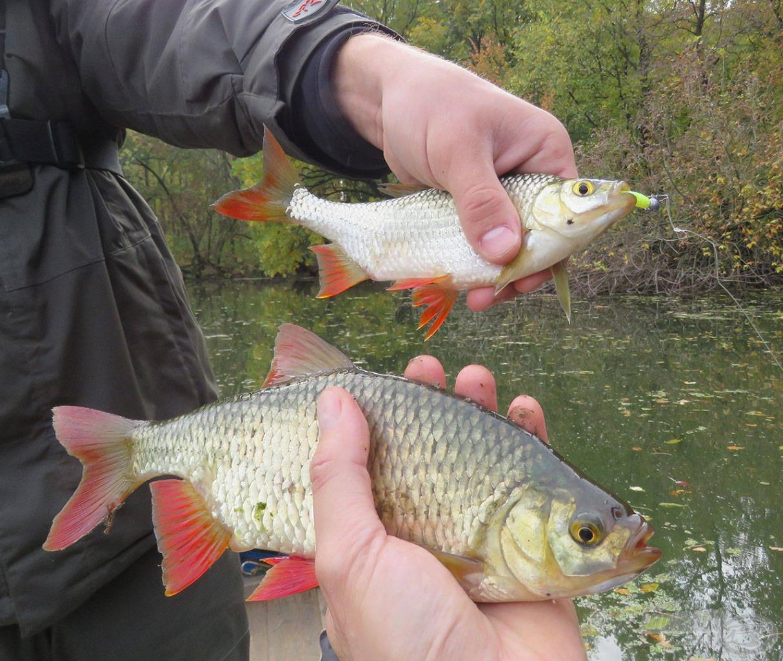 Sokszor egyszerre fogtuk a halakat