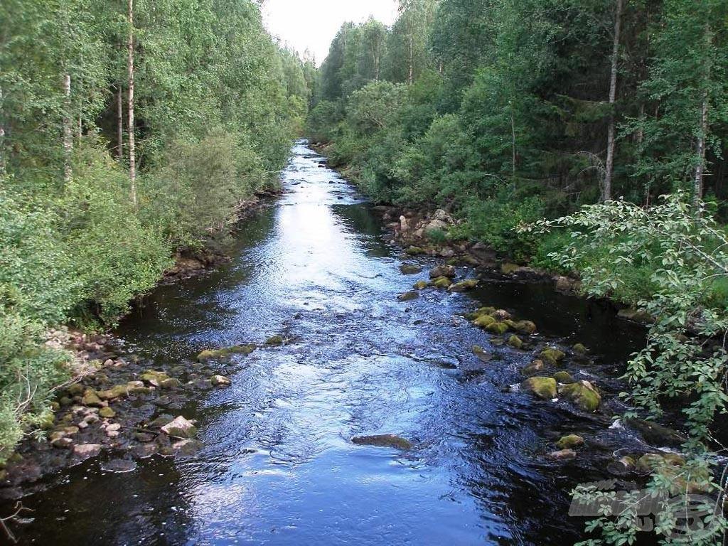 Egy kis patak az erdő ölén