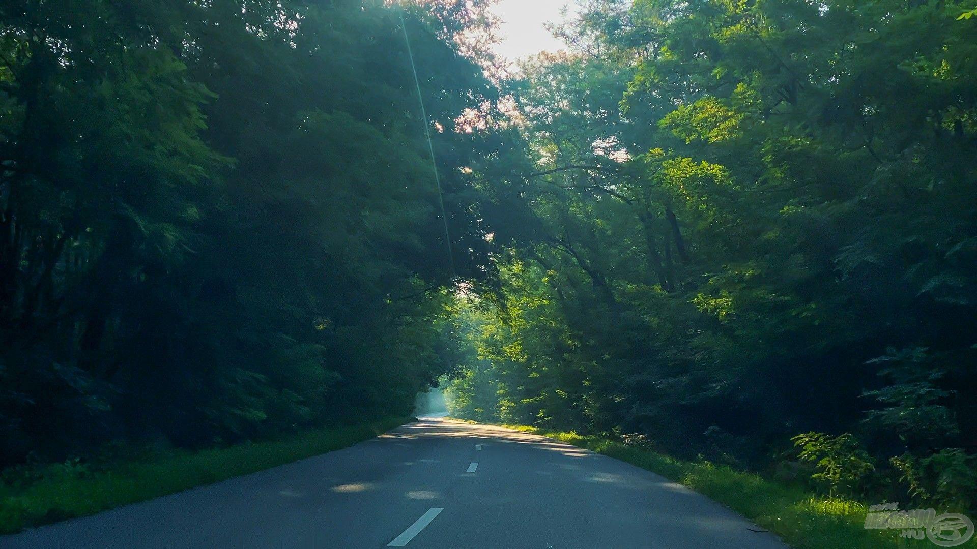Tiszaadony felé az utolsó szakasz nagyon szép úton vezetett