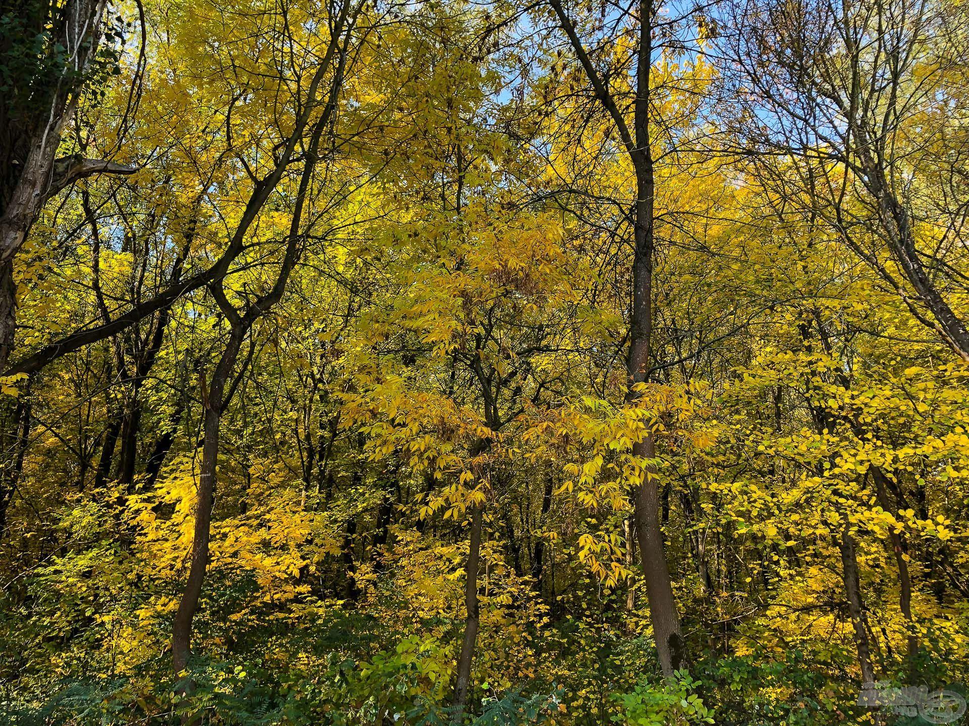 Most van időnk gyönyörködni a szép őszben, mert napos idők sokaságával kényeztet minket
