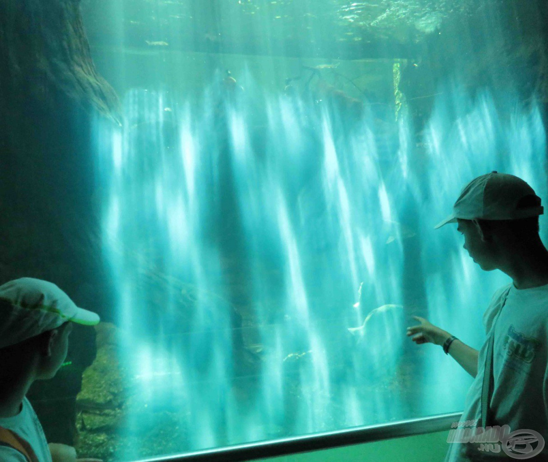 A Tisza-tavi Ökocentrum látogatás szintén állandó program