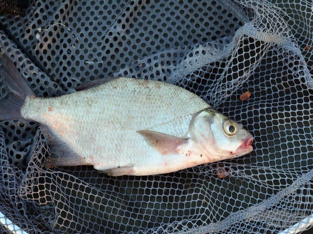 A nap első hala!
