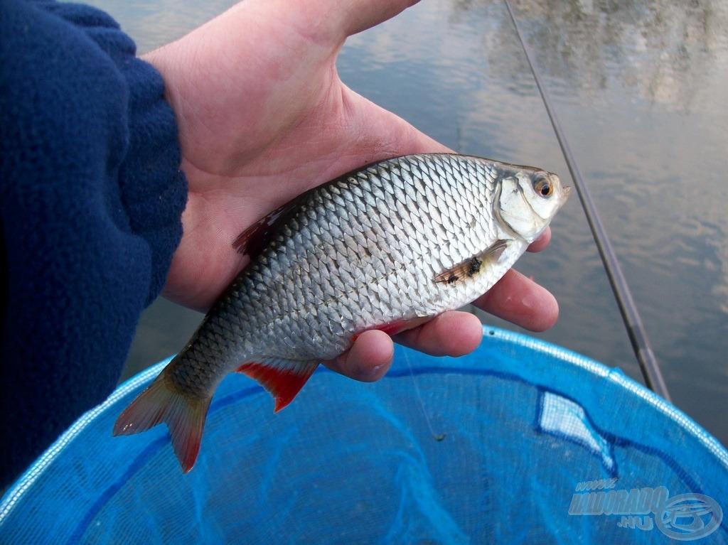 Szép halakat sikerült horogvégre keríteni