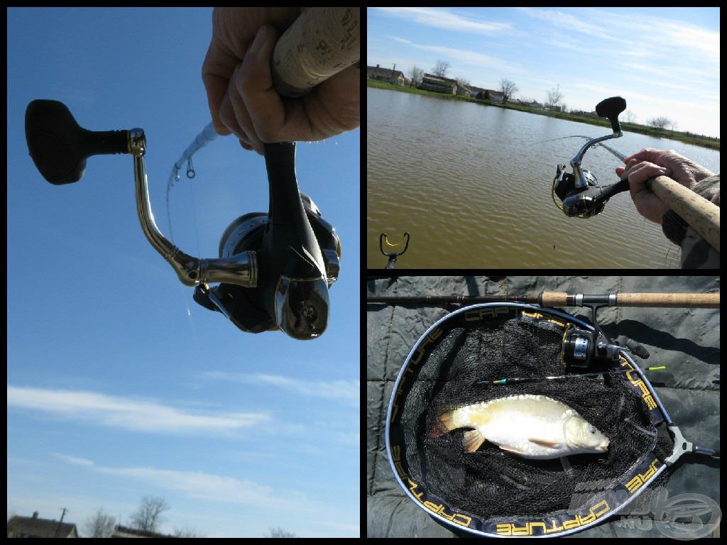 A második méretesebb hal is a pontymatracon, nagyon jól küzdött. Rövid fotózás után ez is mehetett vissza