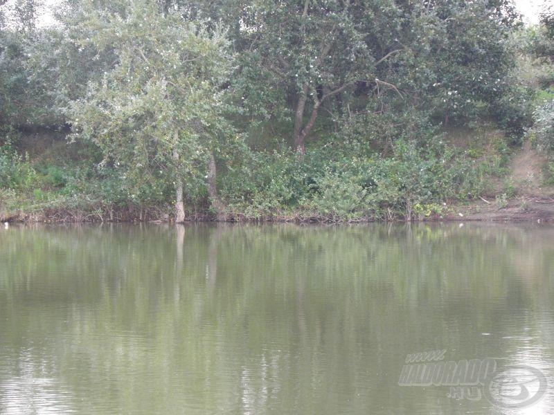 Az ilyen helyeket a vízbe hulló természetes táplálékért a halak gyakran felkeresik