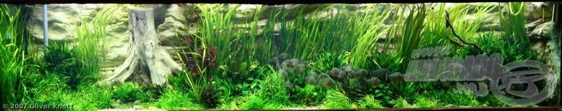 6000 literes akvárium az Amazonas vérszomjas ragadozóival
