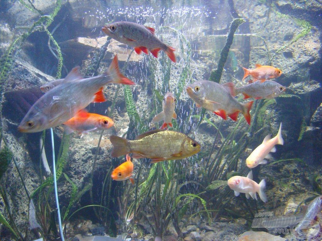 Sokszínű világ, a halőrházi akváriumban is...