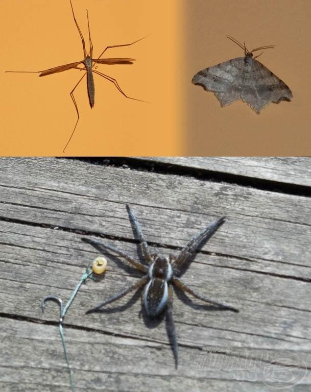 A természet is tette a dolgát, ilyen élőlényeket találtunk a környezetünkben
