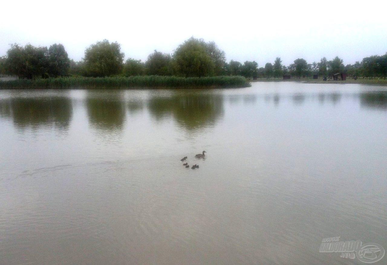 A tó látképe a helyemről nézve
