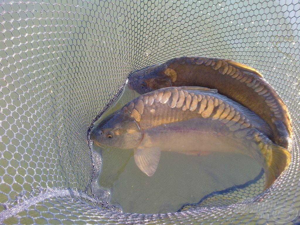 Előfordult, hogy mindkét boton egyszerre volt kapás, ennek eredményeként párosával engedhettem vissza a halakat