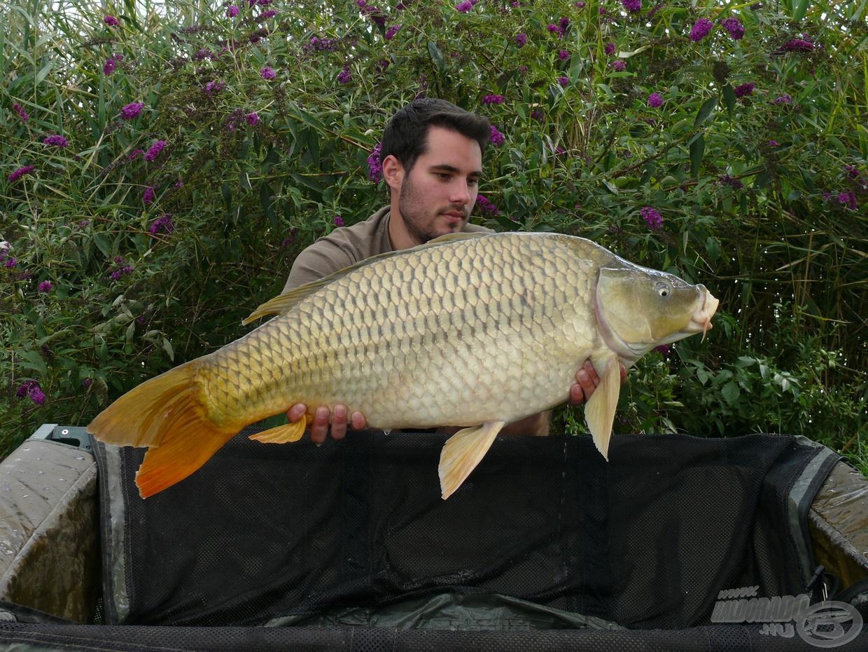 A Fish Aréna jellegzetessége, hogy igen szép számban lakják tőpontyok